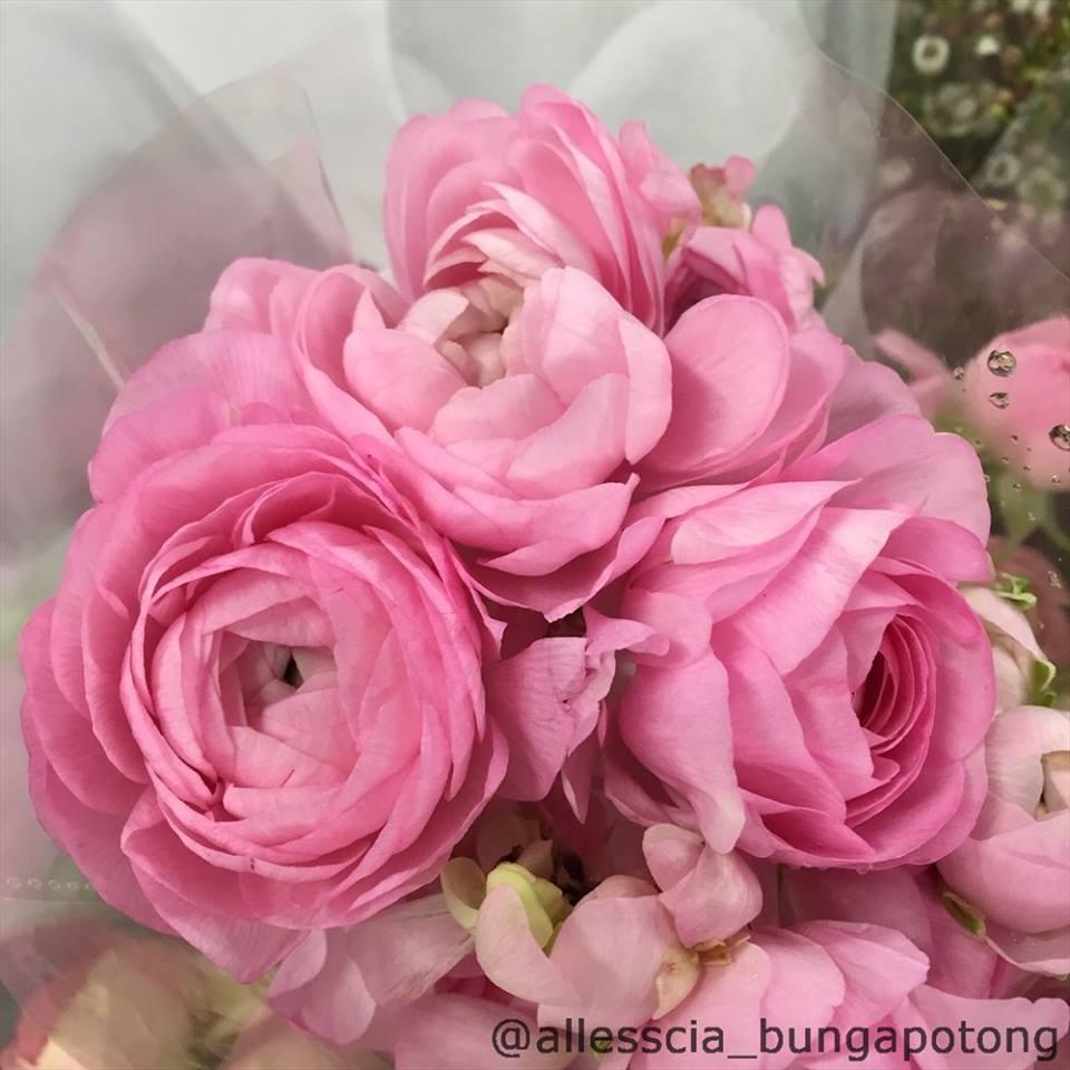 Allesscia Bunga Potong