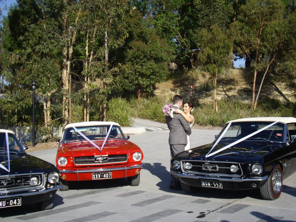 L J Mustangs