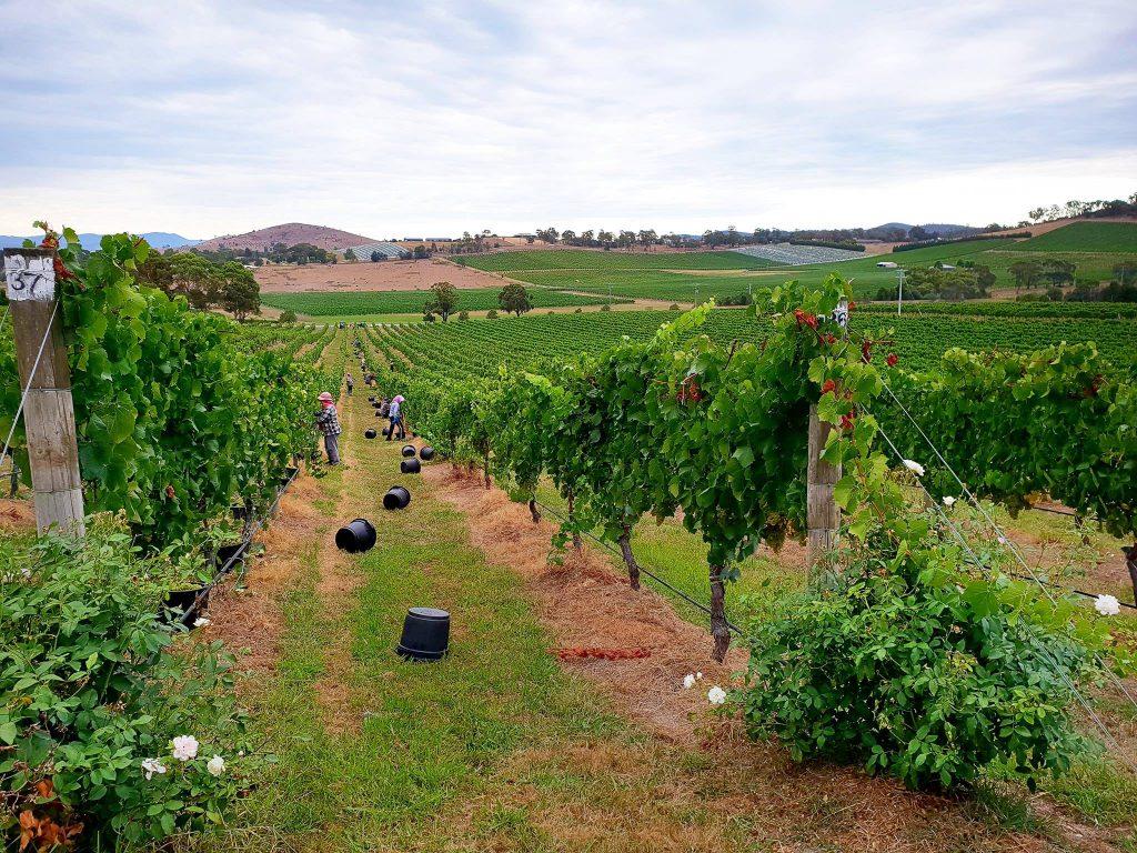 De Bortoli Wines - Wedding Venue, Dixons Creek, Yarra Valley