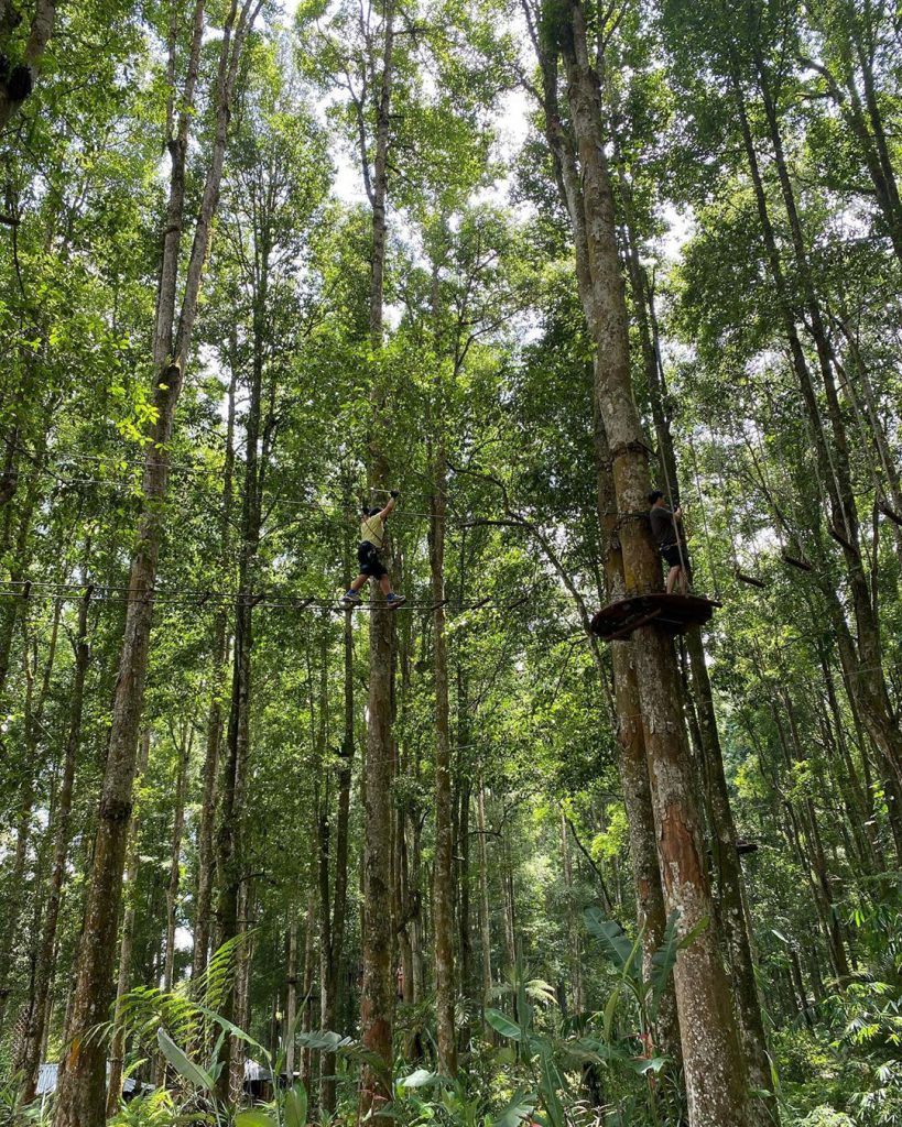 Treetop Adventure for an Unforgettable Family Holiday