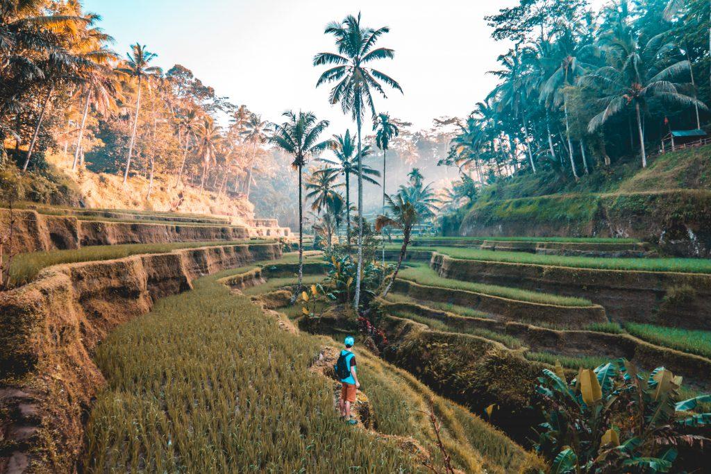 Ubud Bali Tegallang Rice fields