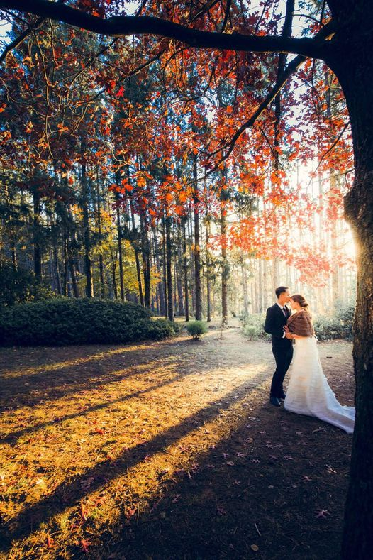 A couple is kissing under towering tree