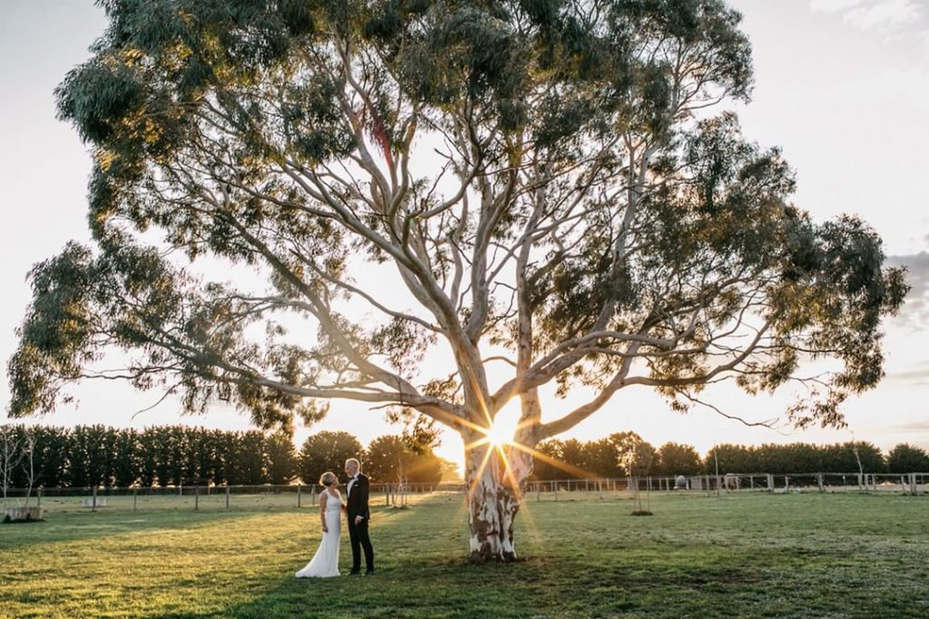 A wedding couple is under towering tree