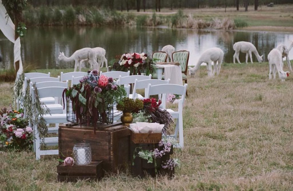 Amazing Rustic Wedding Venues in Hunter Valley - Starline Alpacas Farmstay Resort