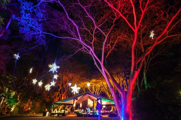 Flames Of The Forest - Wedding Venue, Port Douglas, Queensland