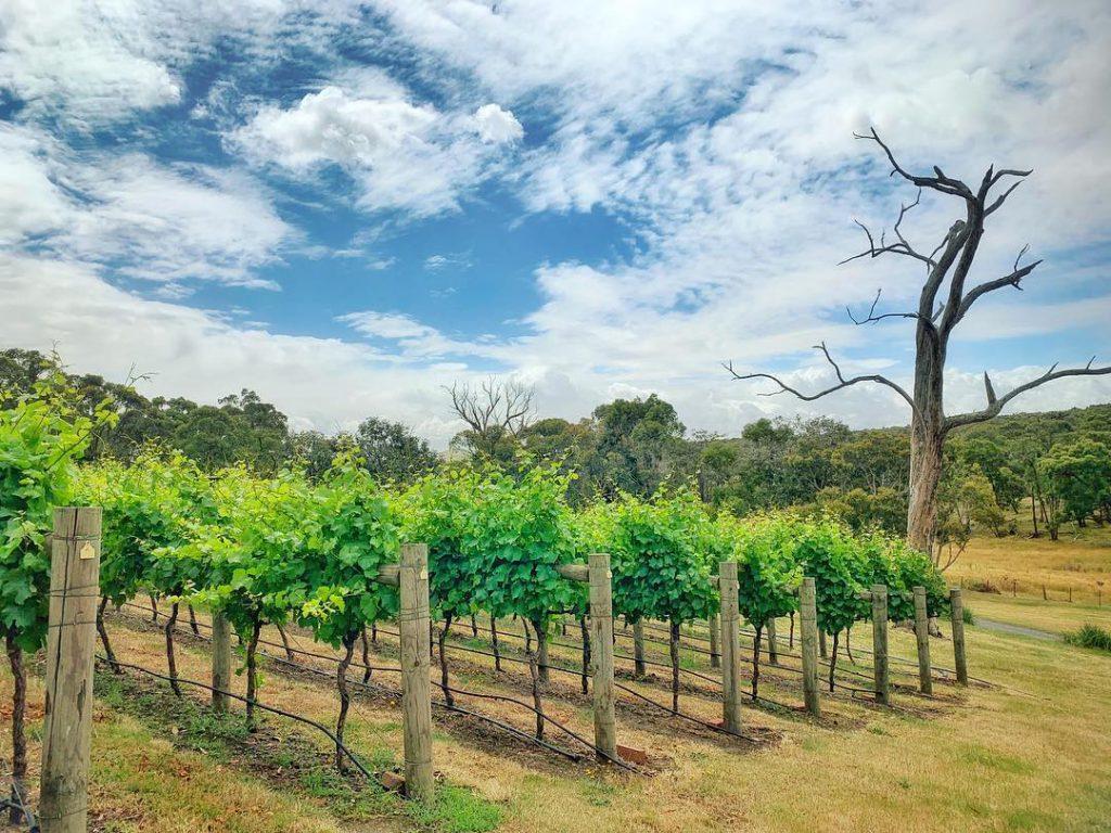 Mitchell Harris Wines - Wedding Venue, Ballarat Central, Ballarat